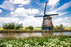 Postcard From Holland (TablinumCarlson) Tags: niederlande netherlands windmühle postkarte postcard wolken sky himmel clouds kanal channel blumen wiese leica leicam m240 holland nordholland alkmaar northholland windmill mühle wind 28mm summicron nederland dutch
