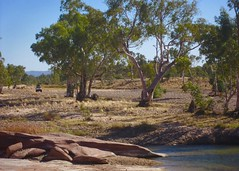 Day 2, 4WD arrives at 15 Mile waterhole.
