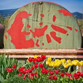 Roadside Tulips and Tank 7712 A