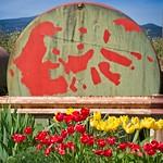Roadside Tulips and Tank 7712 A thumbnail