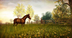 Devin's Eye (4) (Kayleigh Lavender*) Tags: devin devinseye horse cheval landscape roymildor