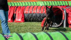 _DSC0097 (SeverX9) Tags: sony alpha 6500 70200gf4 dog run