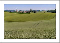 Weite Felder im Frühsommer (Wide fields in early summer) (alfred.hausberger) Tags: badhöhenstadt felder frühsommer