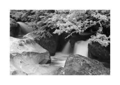 2017BN-6016+ (Luis Tosal) Tags: sajabesaya spain waterfall bosque obj nikon 13528 ais ilford pan película 50 asa microdolx fm2 film
