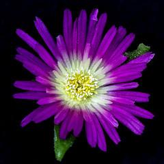 Friday's Flower Power