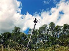 Totem (michaeldantesalazar) Tags: beach lake winnipeg trees tree driftwood drift wood canada clouds sky blue dry summer manitoba tallgrass grass