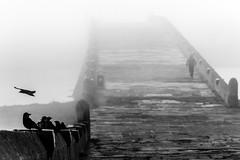 Pay (Özgür Gürgey) Tags: 2018 70300mm bw büyükçekmece d750 nikon birds bridge fog grainy people silhouette özdemirasaf istanbul poem şiir highkey