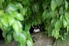 猫 (fumi*23) Tags: ilce7rm3 sony 55mm sonnar zeiss emount sonnartfe55mmf18za sel55f18z cat chat katze gato neko feline animal street alley alleyway miyazaki green plant ねこ 猫 ソニー 宮崎 緑