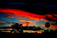 French Riviera (Desc/Em) Tags: cityofnice palm palmier frenchriviera riviera sky ciel clouds cloud côtedazur alpesmaritimes meridionalalps red