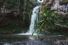 Como me encanta salir y conocer nuevos lugares como estos (dany_jimnez) Tags: nature naturephotography mountains trip viaje cascada nikond7500 naturelovers photo ecuador volcan travel lifestyle vida bosque