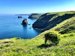 Cornwall Coast Path (heathernewman) Tags: landscape travel walking cliffs sunshine bluebells green blue trees sea ocean flowers uk england southwestengland coastpath coast countryside aonb cornwall