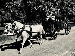 Olden days (The Big Jiggety) Tags: horses chevaux caballos pferden williamsburg virginia va usa america coach caleche carosse car