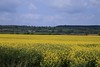 Rapeseed. (AnnWhit) Tags: rapeseed