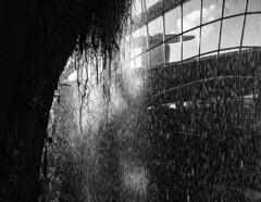 Cloud Forest Waterfall / Искусственный водопад в парке (dmilokt) Tags: чб bw черный белый black white dmilokt вода водопад water waterfall