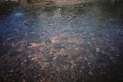 We were watching little fish (knautia) Tags: malmesbury wiltshire riveravon tetburyavon england uk june 2018 film ishootfilm olympus xa2 fuji superia 400iso olympusxa2 nxa2roll24 river avon fish footpath