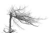 NOT HOW LONG, BUT HOW WELL YOU HAVE LIVED, IS THE MAIN THING. (Irene2727) Tags: tree branch skeleton nature blackandwhite bw