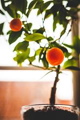 318 of 365: Flourescent Fruit