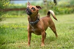 ~~ Heureux Anniversaire ma Lily... ~~ (Joélisa) Tags: lily chien dog anniversaire juin2018 fabuleuse