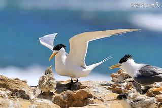 Taking Tern's