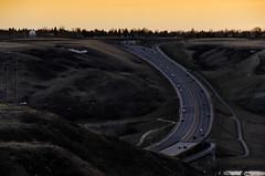 Lethbridge Coulee Road (Bracus Triticum) Tags: lethbridge coulee road アルバータ州 alberta レスブリッジ canada カナダ 4月 四月 卯月 shigatsu uzuki unohanamonth 2018 平成30年 spring april