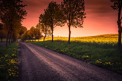 Sunset at country road