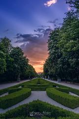 Atardecer en El Retiro (por Sergio Núñez) Tags: retiro madrid atardecer tokina 1120 parque puesta sol