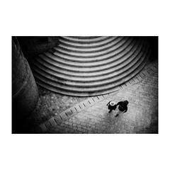dubrovnik (s_inagaki) Tags: monochrome walking bnw street モノクロ oldlens 白黒 bw 散歩 vintagelens blackandwhite dubrovnik スナップ croatia ドゥブロヴニク オールドレンズ クロアチア snap industar69 stairs 階段