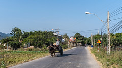 Ox cart on rural road (phuong.sg@gmail.com) Tags: asia asphalt blue country countryside day drive empty field foliage freeway grass green highway island landscape natural nature outdoor park phan road roadway route rural season side sky speed speedway summer sun sunrise sunset thiet transport transportation travel tree trip tropical vietnam way