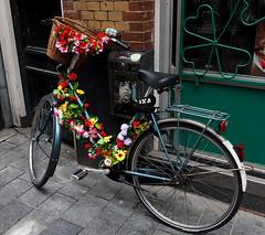 Bicycle (Pico 69) Tags: blumen bunt fahrrad holland niederlande amsterdam pico69