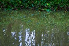 Reflection after rain (obLiterated) Tags: water runcorn treesplants creek reflection green