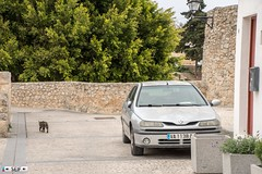 Renault Laguna ibiza Spain 2018 (seifracing) Tags: renault laguna ibiza spain 2018 seifracing spotting services emergency europe rescue recovery transport traffic trucks cars car voiture vehicles vehicle seif photography photographe security