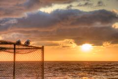 Just Watching the Sunset (Michael F. Nyiri) Tags: seagulls sunset clouds redondobeach california sea ocean