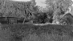 WP_20180602_19_10_23_Pro (www.ilkkajukarainen.fi) Tags: viro baltic autiotalo emty house talo piha blackandwhite mustavalkoinen monochrome abandoned tyhjä window ikkuna happy life travel traveling visit maaseutu countrysidide ruoho nurmikko heinikko