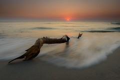 Driftwood (derliebewolf) Tags: natur ostsee sunset longexposure balticsea beach summer driftwood goldenhour landscape nature sky fineart waves water reflection