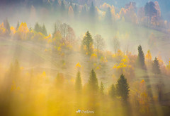 fog over the forest in morning light -171805 (M. Pellinni) Tags: fog light sunrise forest background over morning beautiful nature tree yellow foliage rolling hill autumn amazing atmosphere carpathian mountain outdoor haze stage origin smoke illumination primeval scene mist irradiation formation foggy sunlight plant beginning color genesis ray magnificent environment golden downfall through orchard fabulous glow landscape uphill fire texture hillside