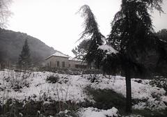 Shivering upland