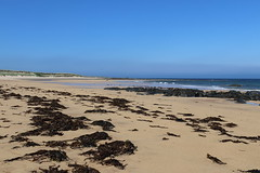 St Combs Beach_may 18_638 (Alan Longmuir.) Tags: stcombsbeach grampian aberdeenshire stcombs