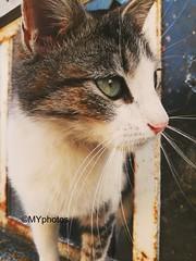 The noise (Minne Yaël) Tags: cat chat look le regard noise bruit eyes yeux france phone téléphone streetscat avril april animaldecompagnie animal animals pet