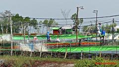 Fish ponds around Kebanyartimu, Pulau Madura (Sekitar) Tags: pulau madura suramadu insel island indonesia provinsi jawa timur ostjava java eastern fish ponds kebanyartimu ikan