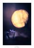 Dessine-moi un mouton (Naska Photographie) Tags: naska photographie photo photographe paysage proxy proxyphoto printemps macro macrophotographie macrophoto minimaliste minimalisme monochrome scille scilla fleur flare flower floral flou fleuri floraison flowers fleurs art artistique artist composition landscape color couleur bokeh lune moon