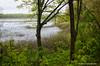 Grand Mere Lake (mswan777) Tags: hike 1855mm nikkor d5100 nikon mist fog green leaf spring scenic nature outdoor stevensville michigan landscape tree wood forest water lake