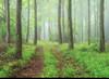 Misty Spring Wood (jactoll) Tags: cotswolds mist misty mistytrees woodland sony a7iii sony2470mmf28gm jactol