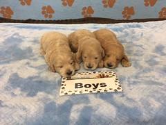 Roxie Boys pic 2 6-2