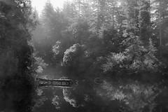 Misty Morning on the Pond (marvhimmel) Tags: shoreline general ocean oregoncoast florencetonewport mist pond