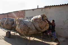 (REDES DA MARÉ) Tags: americalatina brasil complexodamare favela jornalmaredenoticias mare novaholanda ong redesdamare riodejaneiro catador homem lixo reciclador