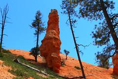 IMG_2216 (Ichiban7too) Tags: bryce national park canyon utah nature hoodoo red sandstone