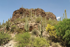 Tucson - Sabino Canyon - 2018 (tonopah06) Tags: sabinocanyon 2018 arizona az saguaro landscape desert santacatalina mountains catalinas stop1