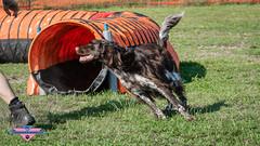 _DSC0163 (SeverX9) Tags: sony alpha 6500 70200gf4 dog run