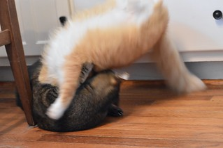 Cricket and Jimmy wrestle (3 of 3)