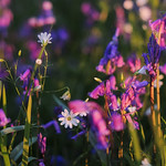Flower Detail, Kinclaven thumbnail